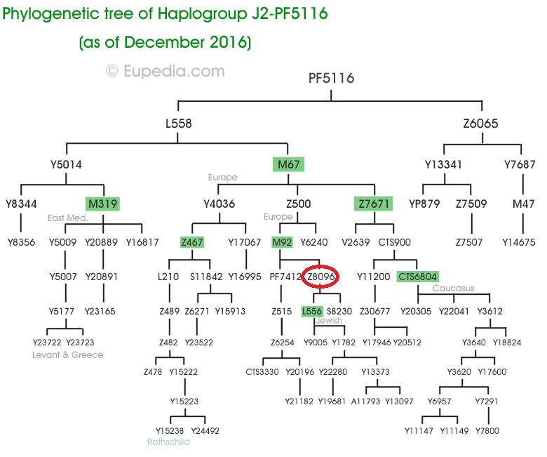 J2-PF5116-tree ret